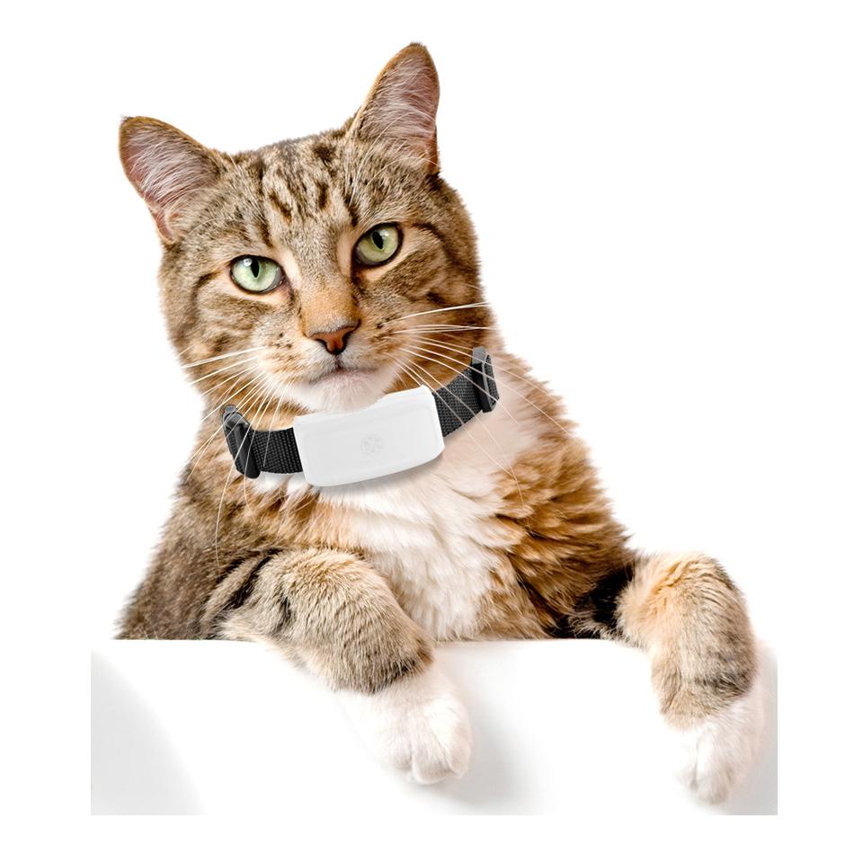 hur smart är en katt